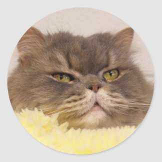 scottish fold cat round sticker