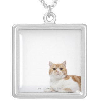 Scottish Fold Cat Silver Plated Necklace