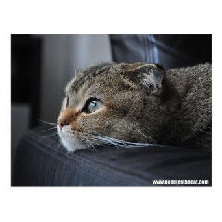 Scottish fold cat: thinking of you postcard