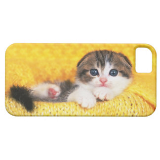 Scottish Fold; is a breed of cat with a natural Case For The iPhone 5