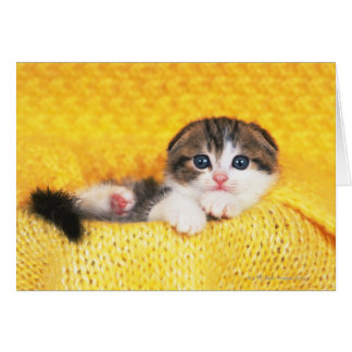 Scottish Fold; is a breed of cat with a natural Greeting Card