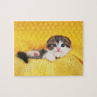 Scottish Fold; is a breed of cat with a natural Jigsaw Puzzle