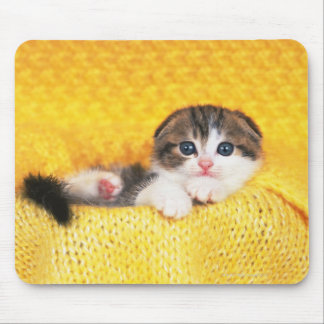 Scottish Fold; is a breed of cat with a natural Mouse Pad
