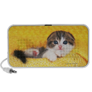 Scottish Fold; is a breed of cat with a natural Laptop Speaker