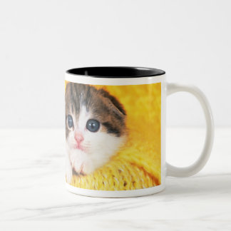 Scottish Fold; is a breed of cat with a natural Two-Tone Coffee Mug