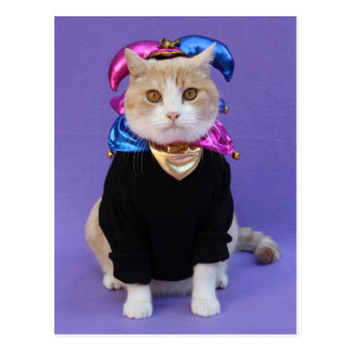Scottish Fold Jester Postcard