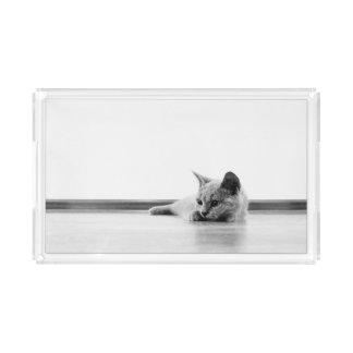 Scottish Fold Kitten Cat Super Cute Acrylic Tray