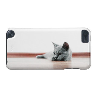 Scottish Fold Kitten Cat Super Cute iPod Touch (5th Generation) Cases