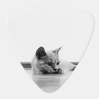 Scottish Fold Kitten Cat Super Cute Plectrum