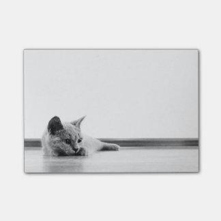 Scottish Fold Kitten Cat Super Cute Post-it Notes