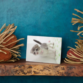Scottish Fold Kitten Display Plaques