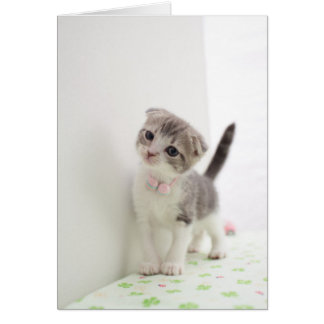 Scottish Fold Kitten Greeting Card