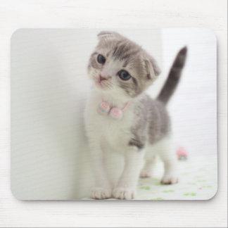 Scottish Fold Kitten Mouse Pad