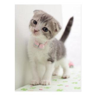 Scottish Fold Kitten Postcard
