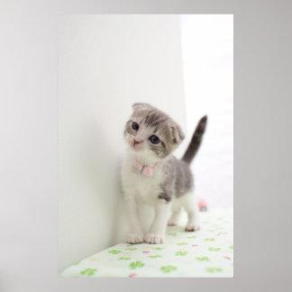 Scottish Fold Kitten Poster