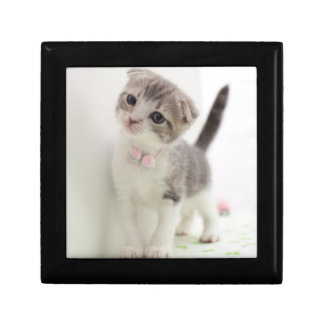 Scottish Fold Kitten Small Square Gift Box