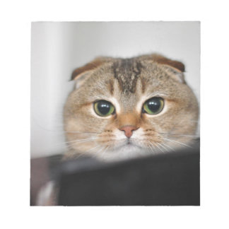 Scottish fold scared note pads