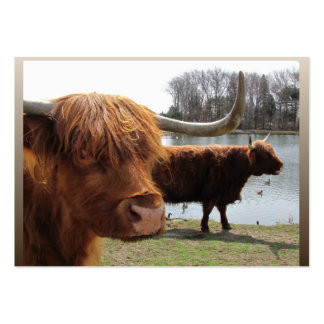 Scottish Highland cattle ~ ATC Pack Of Chubby Business Cards