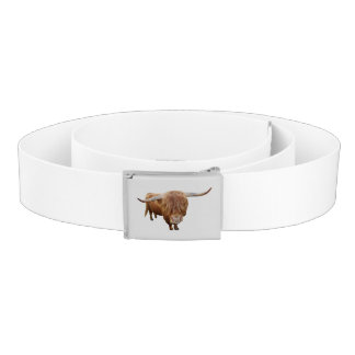 Scottish highland cattle belt