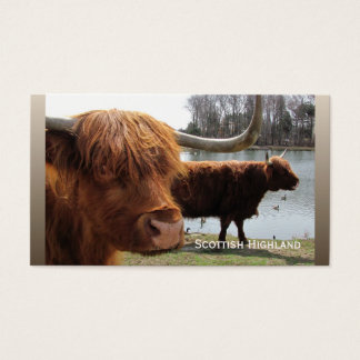 Scottish Highland cattle ~ biz card