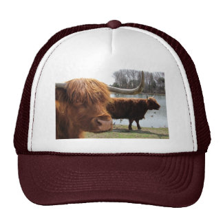 Scottish Highland Cattle ~ hat