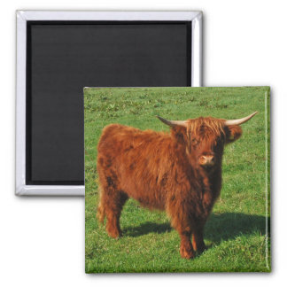 Scottish Highland Cattle Magnet