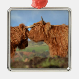 Scottish Highland Cattle Silver-Colored Square Decoration