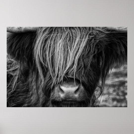 Scottish Highland Cow, Highlander, Highland Cattle Poster
