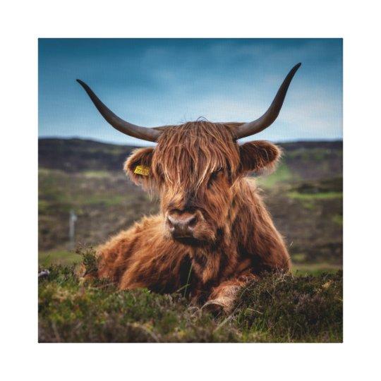 Scottish Highland Cow Longhorn Bull Rancher Canvas Print