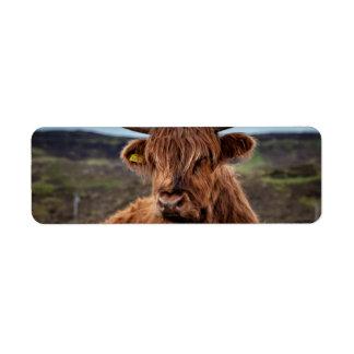 Scottish Highland Cow Longhorn Bull Rancher Return Address Label