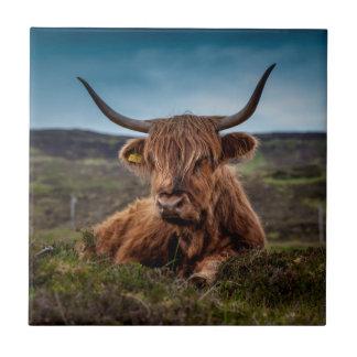 Scottish Highland Cow Longhorn Bull Rancher Tile