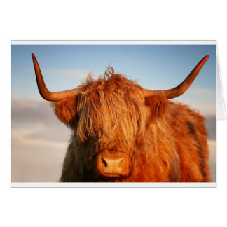 Scottish Highland Cow - Scotland Card
