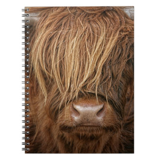 Scottish Highland Cow - Scotland Notebook