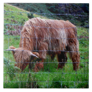 """Scottish Highland Long-Haired Cow"" Tile"