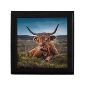 Scottish Highland longhorns Rancher Gift Box