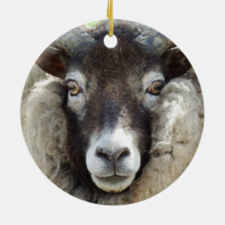 Scottish Sheep Close Up Christmas Ornament