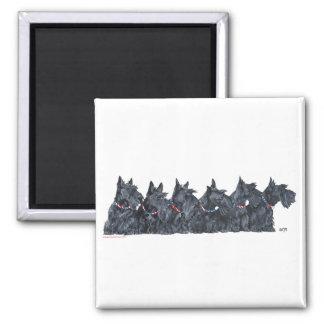 Scottish Terrier Gathering Square Magnet