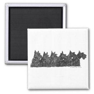Scottish Terrier Gathering Square Magnet