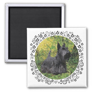 Scottish Terrier in Green Woods Square Magnet