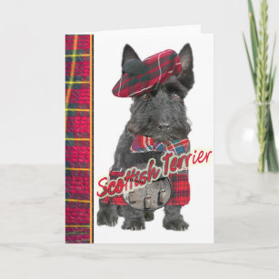 Scottish kilt cards zazzle uk scottish terrier in kilt greeting cards m4hsunfo