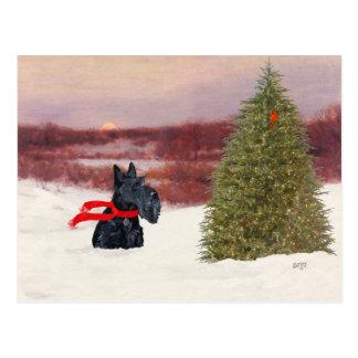Scottish Terrier in Wintertime Postcard