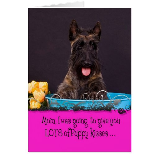 Scottish Terrier Licker License Greeting Cards