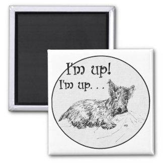 Scottish Terrier Morning Fridge Magnets