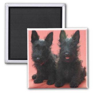 Scottish Terrier puppies magnet