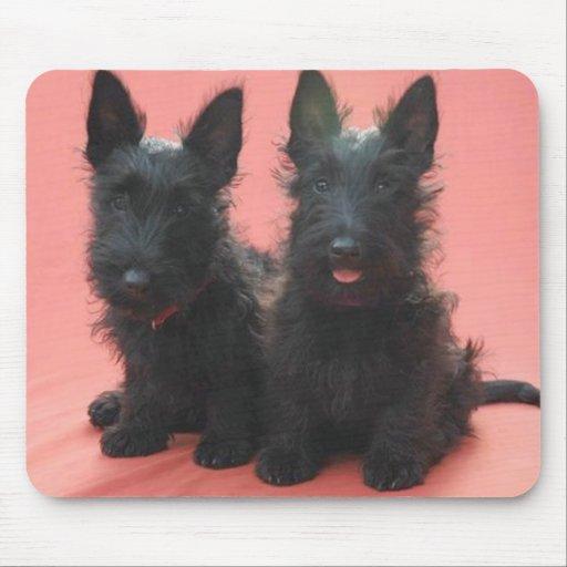 Scottish Terrier puppies mousepad