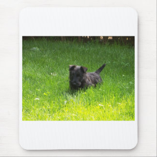 SCOTTISH TERRIER PUPPY MOUSE PADS