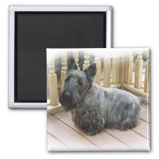SCOTTISH TERRIER SCOTTIE DOG MAGNET