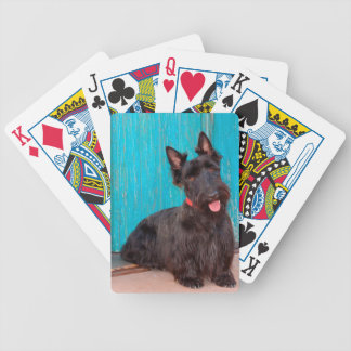 Scottish Terrier sitting by colorful doorway Bicycle Playing Cards