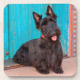 Scottish Terrier sitting by colorful doorway Coaster