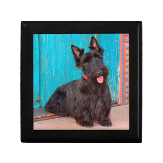 Scottish Terrier sitting by colorful doorway Gift Box